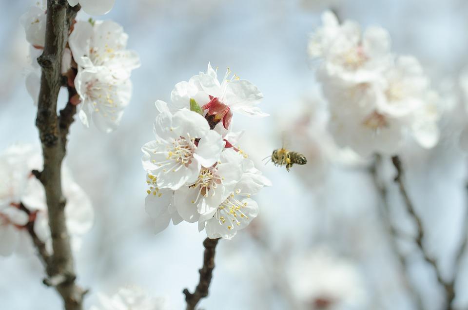 Ein Bienentag im JuZe in Graben-Neudorf