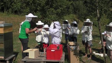 Abenteuer Bienen