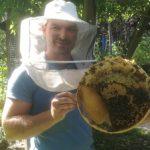 Rähmchen aus der Bienenkugel