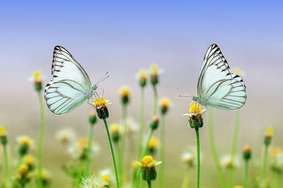 Mit den Bienen bei den Schmetterlingen