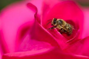 Anmeldung bei der Biene